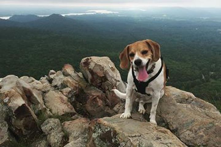 Pet Friendly Pinnacle Mountain State Park