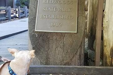 Pet Friendly Big Basin Redwoods State Park