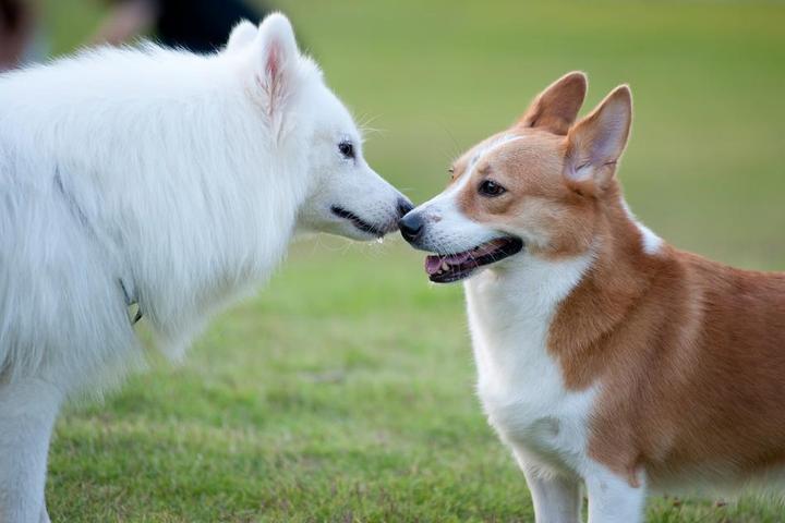 Pet Friendly Montville Township Dog Park