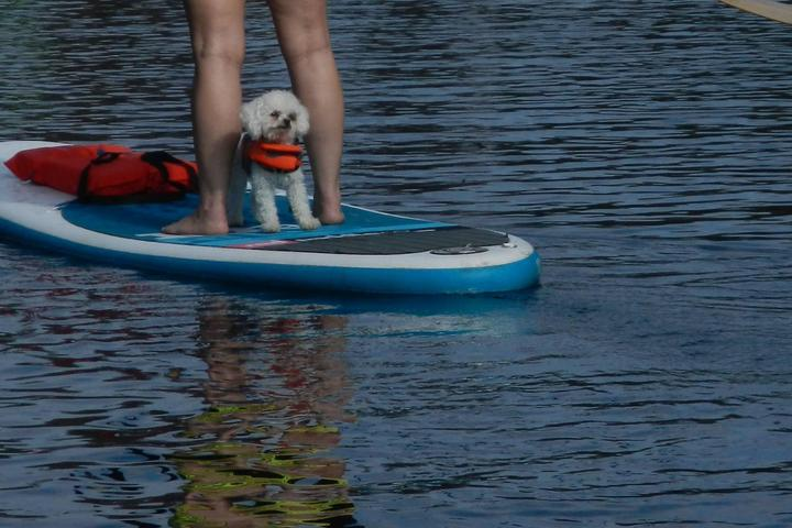 Pet Friendly The Paddling Center at Shingle Creek