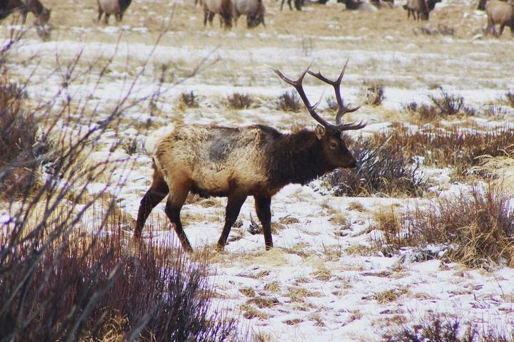 Pet Friendly National Elk Refuge