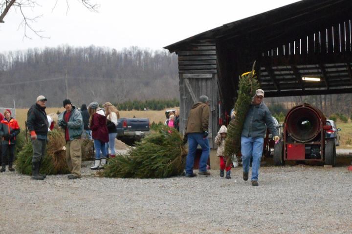 Pet Friendly French Creek Christmas Trees