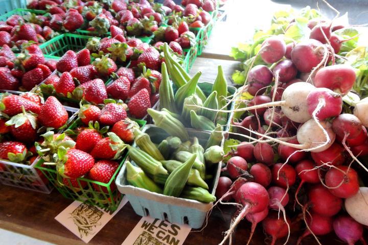 Pet Friendly Brevard County Farmers Market
