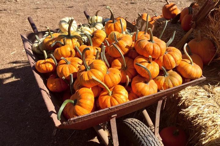Pet Friendly R.A.M. Farms Pumpkin Patch