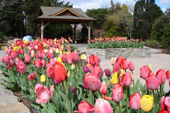 Pet Friendly Bullington Gardens