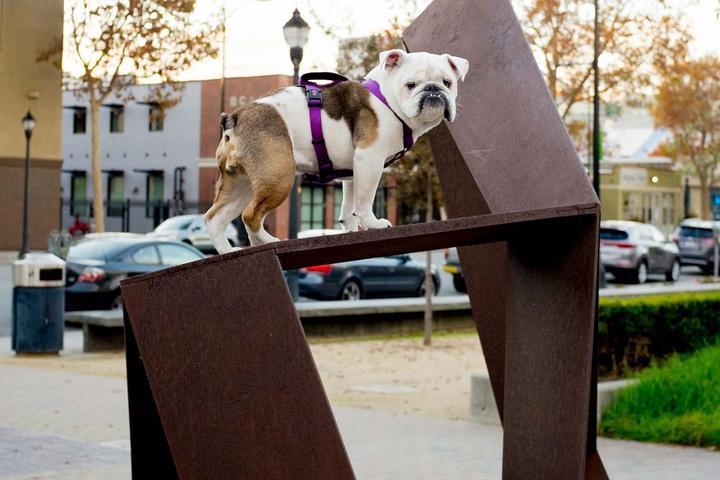 Pet Friendly Public Art San Jose