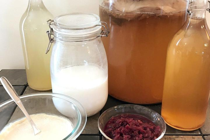 Pet Friendly Discover the Art of Fermenting