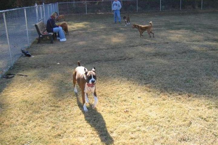 Pet Friendly Windermere Dog Park