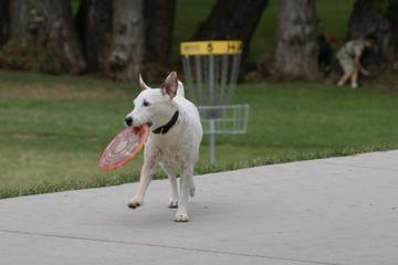 Pet Friendly Sheridan Dog Park