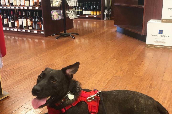 Pet Friendly The Wine Cabinet