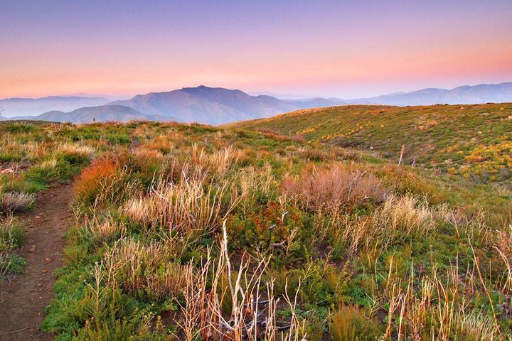 Pet Friendly Cleghorn Mountain Trail