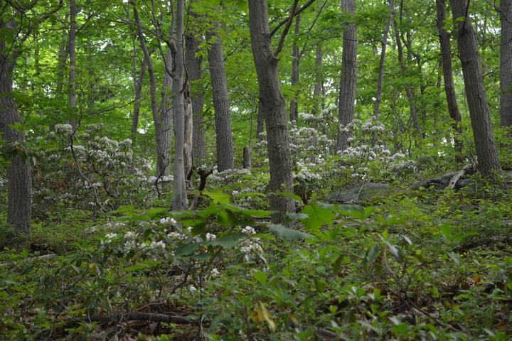Pet Friendly Black Rock Forest Trail