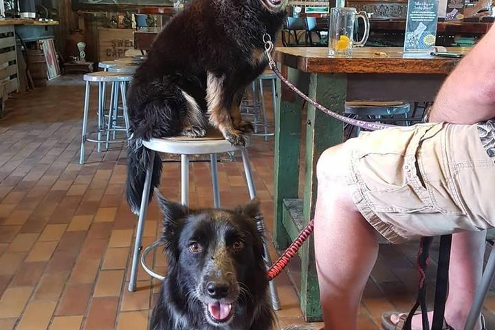 Pet Friendly Old Flame Brewing Co.