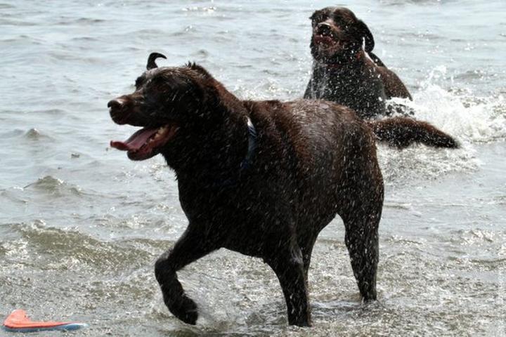 Pet Friendly Larchmont Dog Beach