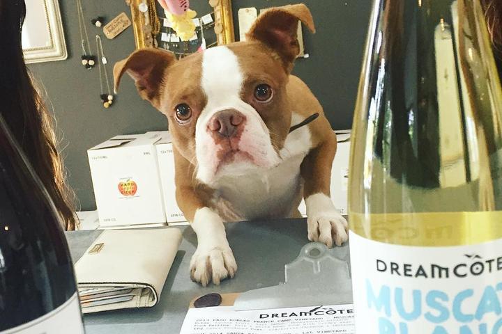 Pet Friendly Dreamcôte Wine Co
