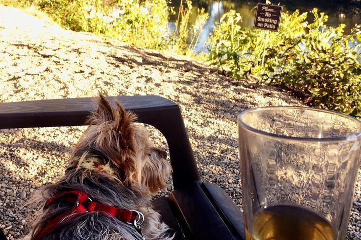 Pet Friendly Currahee Brewing Company