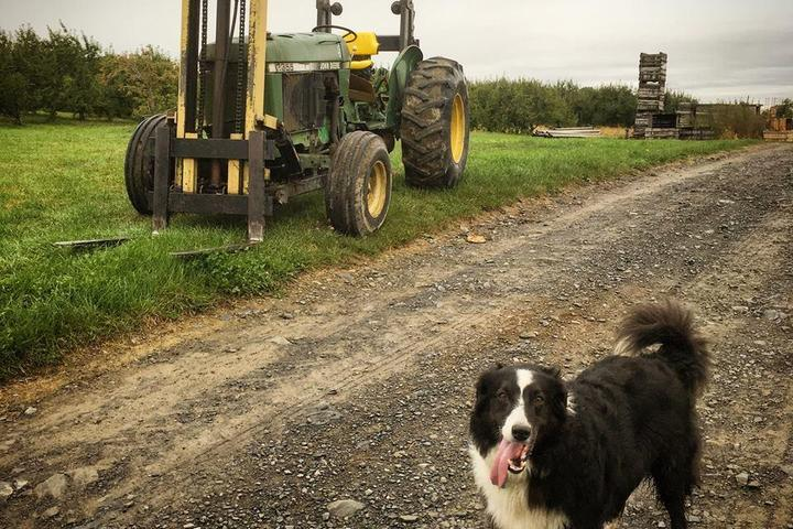 Pet Friendly Wrights Farm