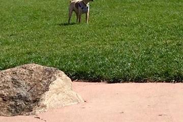 Pet Friendly Castle Rock Dog Park