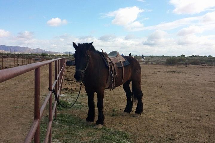 Pet Friendly KOLI Equestrian Center