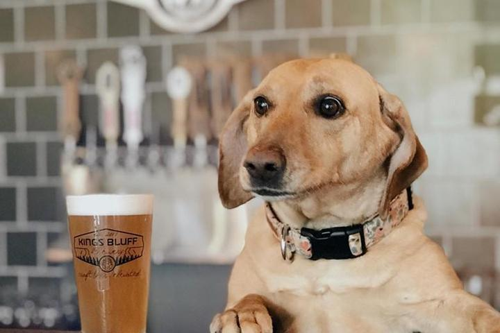 Pet Friendly King's Bluff Brewery