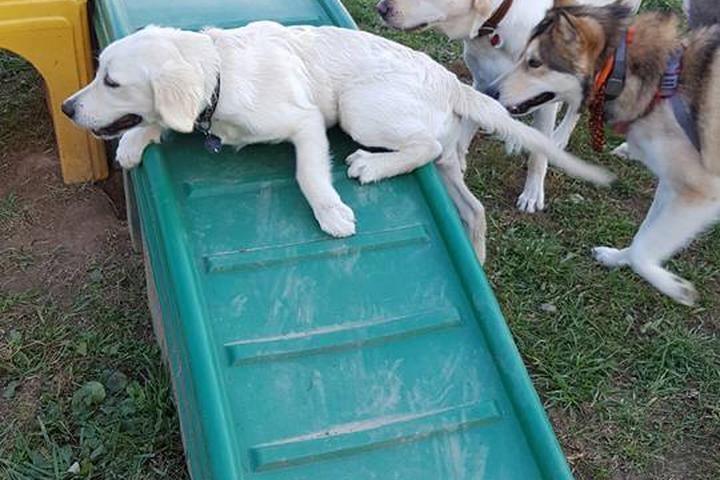 Pet Friendly BARC Park at Hannah More Park