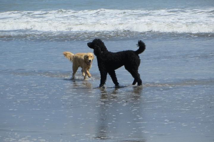 Pet Friendly Bolinas Beach