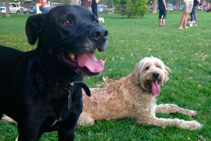 Pet Friendly Draper City Dog Park