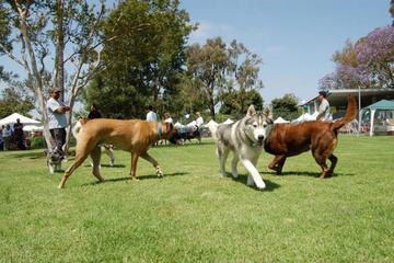 Pet Friendly Fullerton Pooch Park
