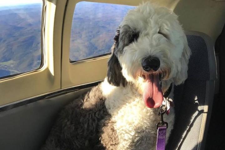 Pet Friendly Cape Air & Nantucket Airlines
