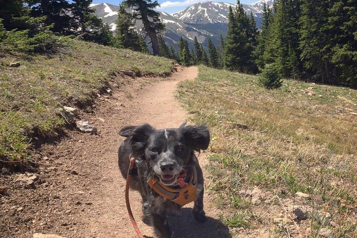 Pet Friendly Mount Flora Trail