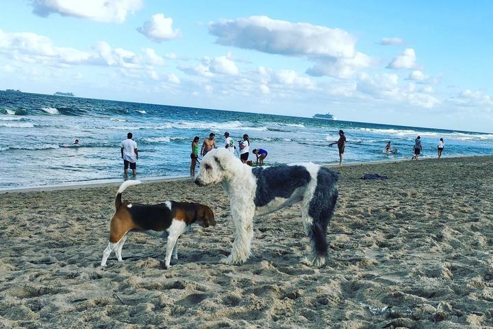 Pet Friendly Canine Beach