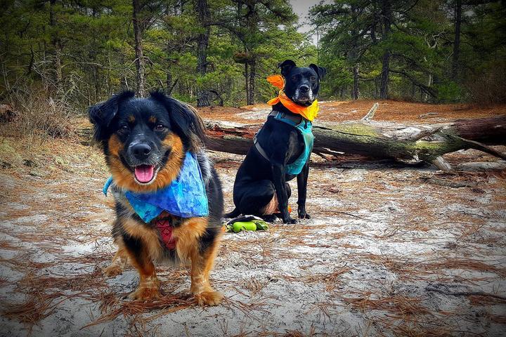 Pet Friendly Mt. Misery Area Trails
