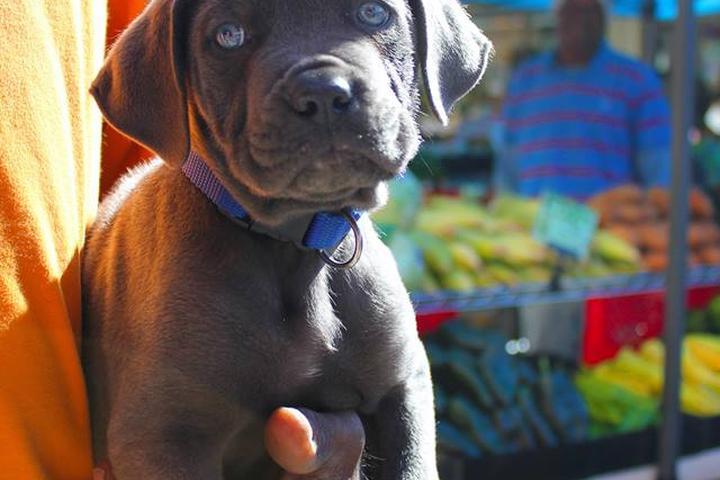 Pet Friendly Findlay Market