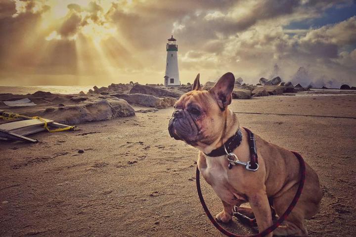 Pet Friendly Seabright Beach
