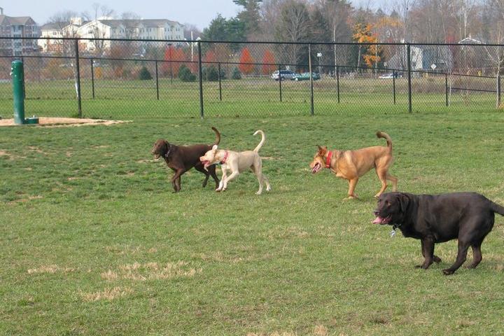Pet Friendly Warminster Township Bark Park