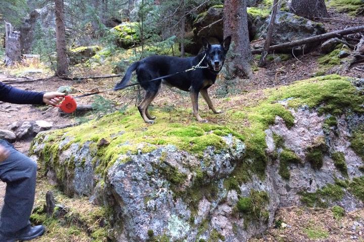 Pet Friendly Three Mile Creek Trail