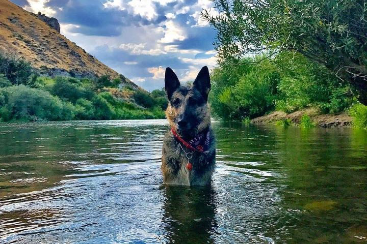 Dog Friendly Reno Nv Bring Fido