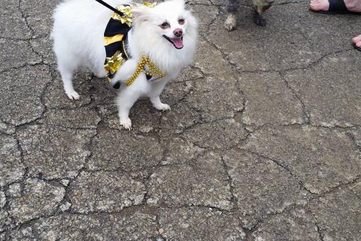 Pet Friendly Carnegie Dog Park