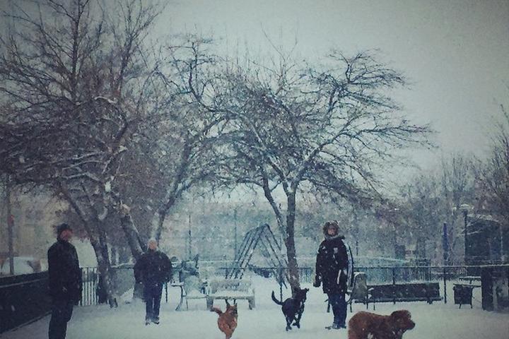 Pet Friendly Murray Playground Dog Run