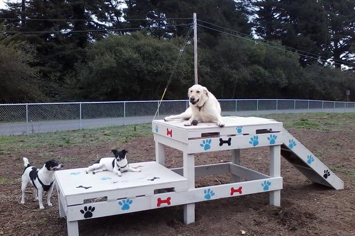 Pet Friendly Fortuna Dog Park