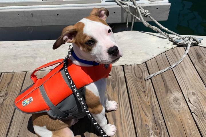 Pet Friendly Aqua Sports Adventures