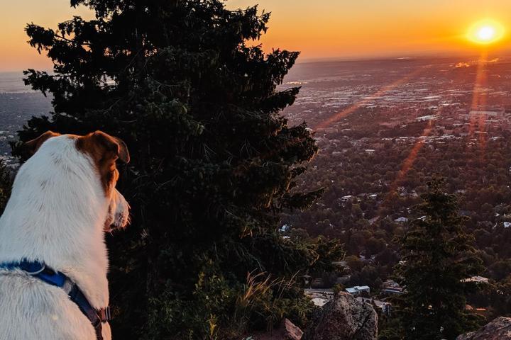 Pet Friendly Boulder Sunrise Hike