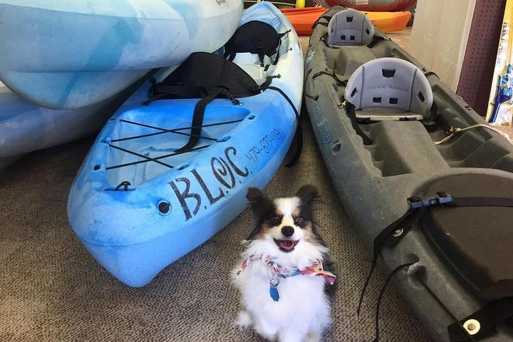 Pet Friendly Beaver Lake Outdoor Center