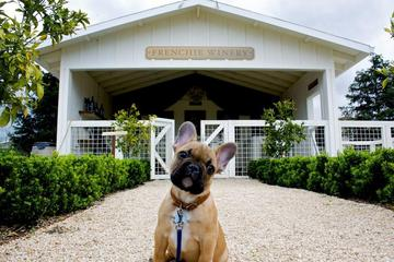Pet Friendly Frenchie Winery