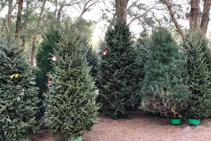 Pet Friendly Santa's Christmas Tree Forest
