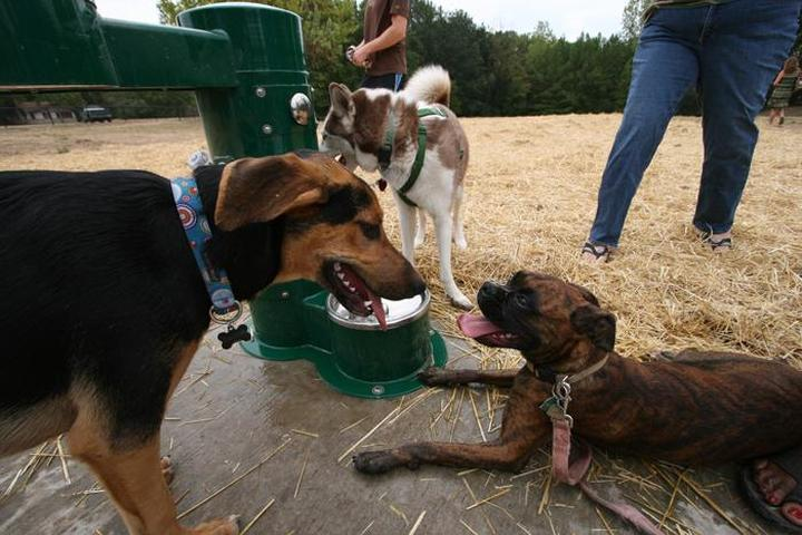 Pet Friendly Swope Park Off Leash Dog Park