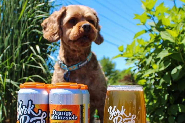 Pet Friendly York Beach Beer Company