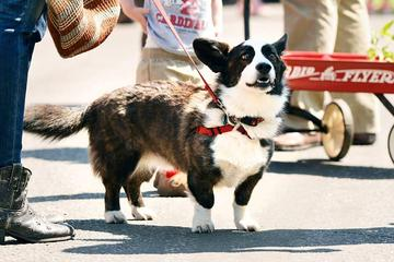 Pet Friendly Hollywood Farmers Market