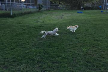 Off Leash Dog Parks In Grand Rapids Mi Bringfido