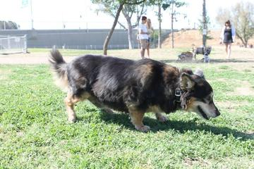 Pet Friendly Cody Kelly Bark Park